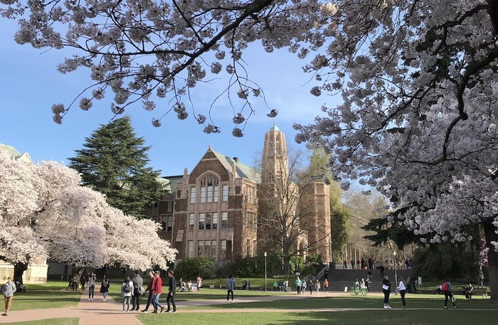 Art Building framed by blooming cherry trees