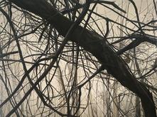 Skyuka in the Fog by Kimberly Clark